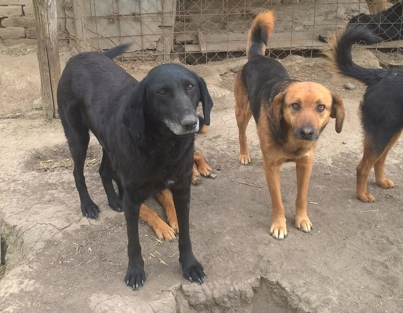 JELLY (ex JERRY) F-X, taille moyenne, env. 20 kg, née 2011 (BACKA) - Prise en charge SPA Pontarlier Jerry211