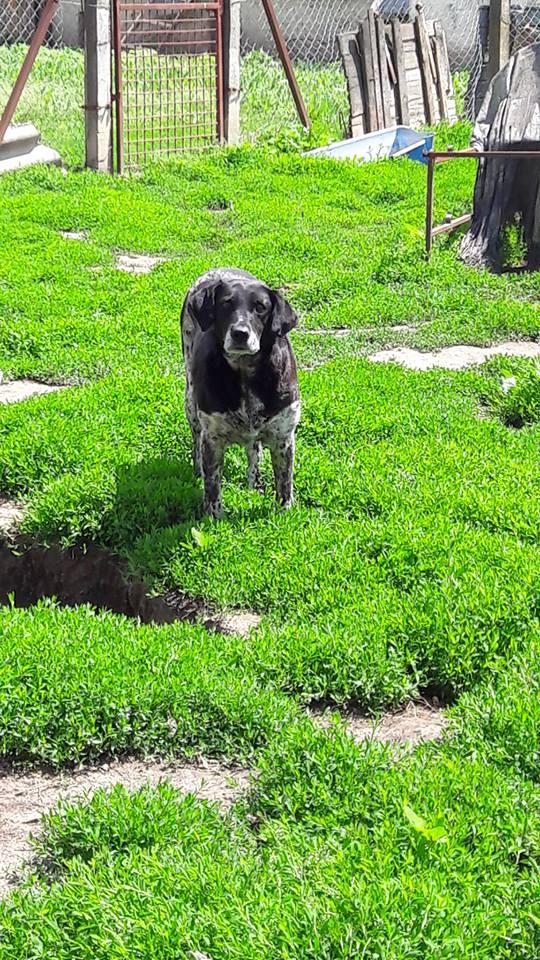 VENDY F-X, taille moyenne, env. 20 kg, née 2008 Ancien de Backa (BELLA) - URGENT ! V10