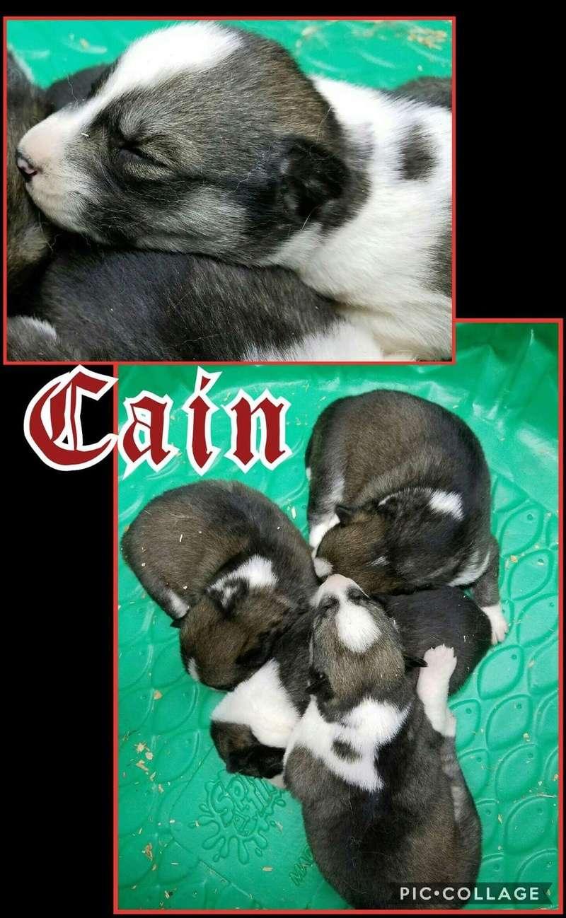 Introducing Cain! Cain_210