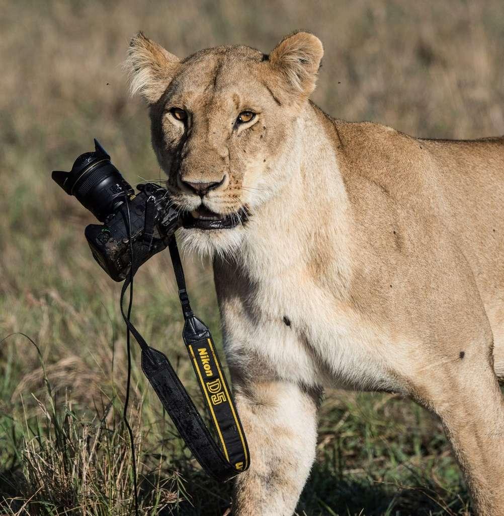 David Yarrow Photography Leones10