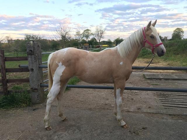 On juge vos chevaux au modèle - Page 6 18194811