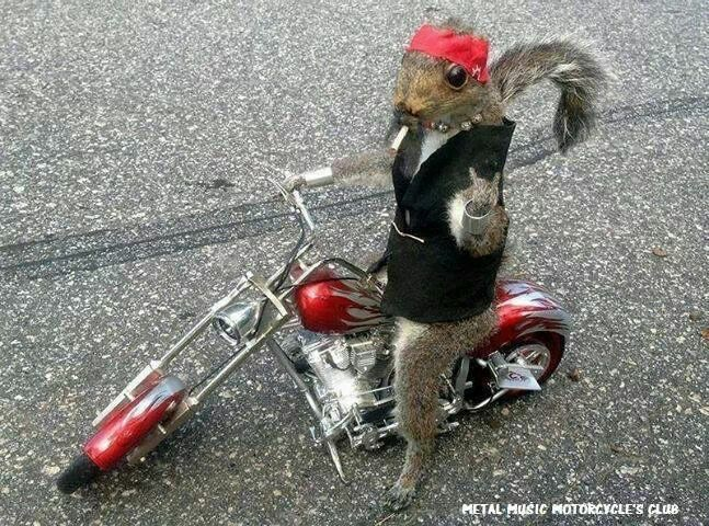 Humour en image du Forum Passion-Harley  ... - Page 12 Img_4918
