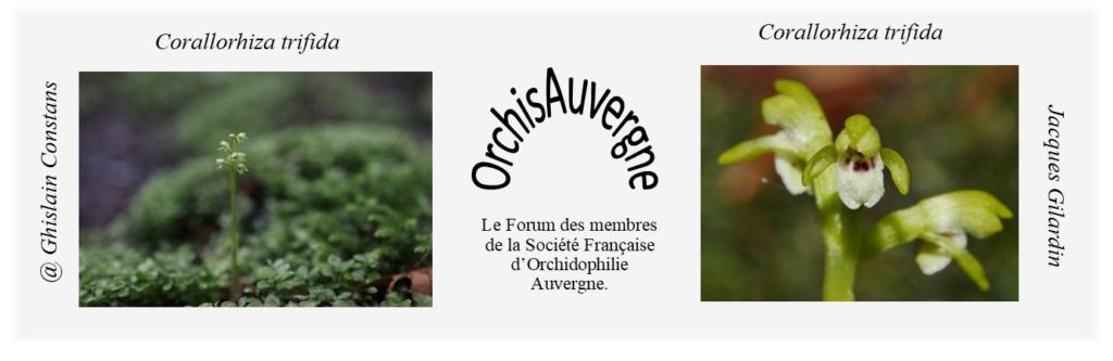 Forum OrchisAuvergne