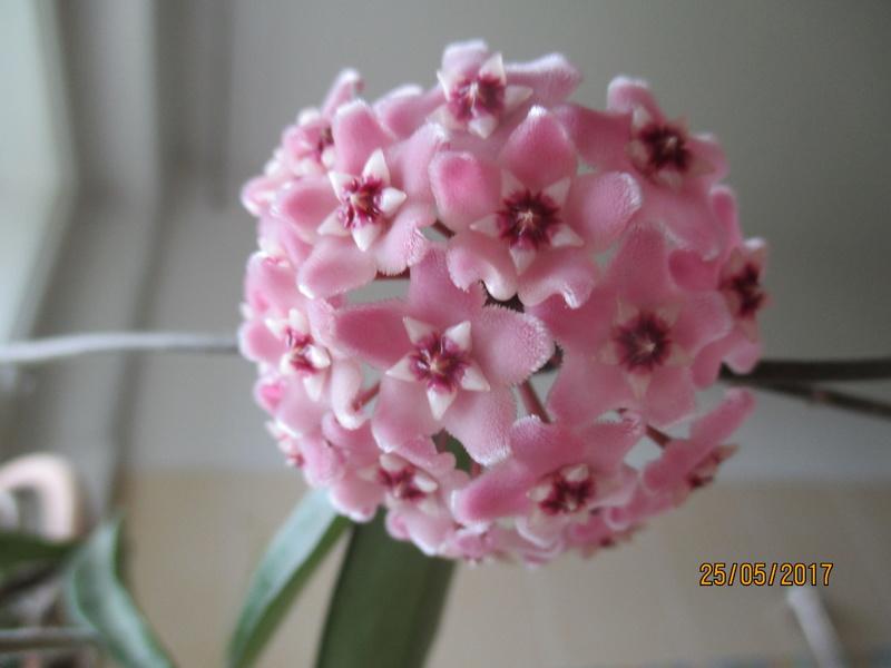 Blüten 2017 - Seite 2 Img_5018