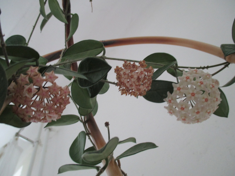 Blüten 2017 - Seite 2 Img_5315