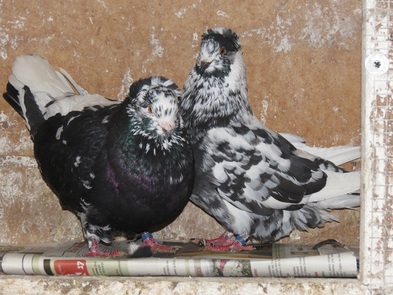 élevage à LEPORCQ Rémi  Img_1315