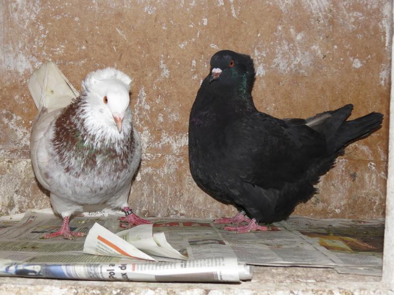 élevage à LEPORCQ Rémi  Img_1322