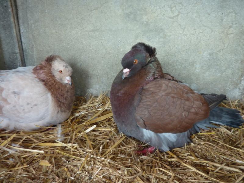 l'élevage à  LARRIEU jerome. P1020911