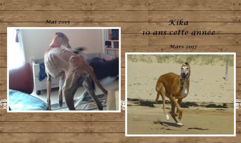 Kika galga 7 ans 1/2 marron  Scooby France  Adoptée  - Page 6 Page310