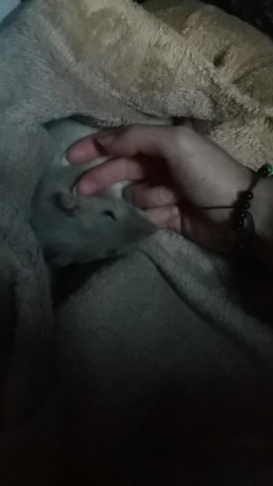 Rat affaibli Snapch10