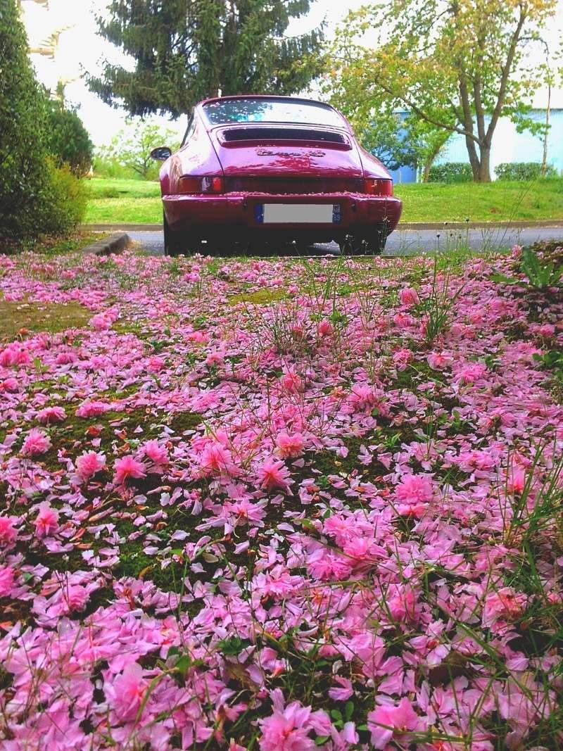 voilà le printemps Img_6320