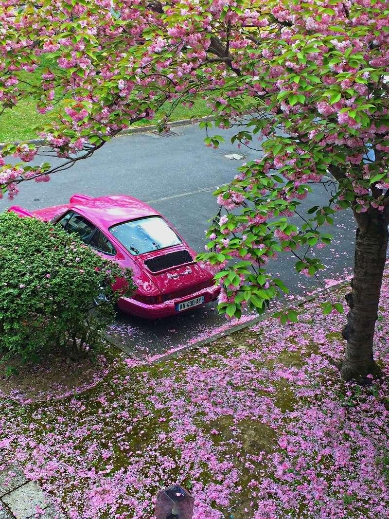 voilà le printemps Img_6321