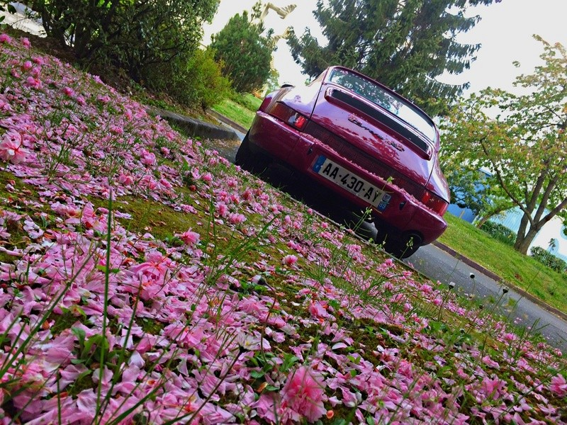 voilà le printemps Img_6325