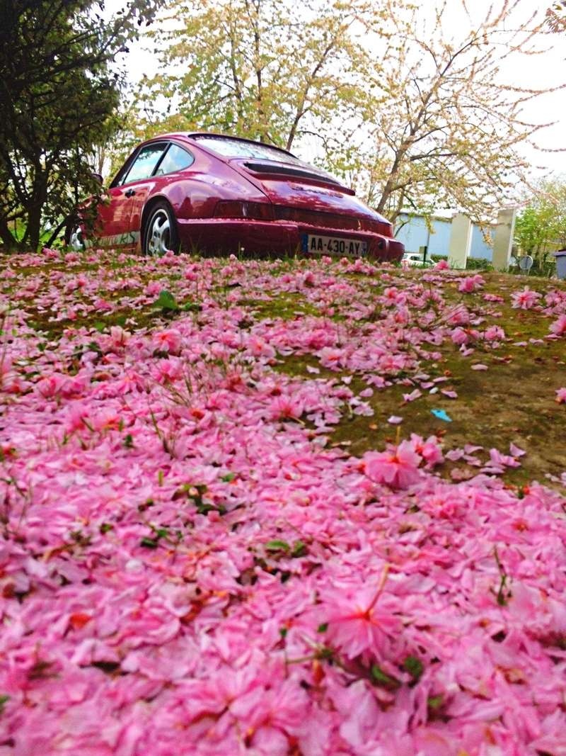 Une Belle photo de Porsche - Page 2 Img_6378