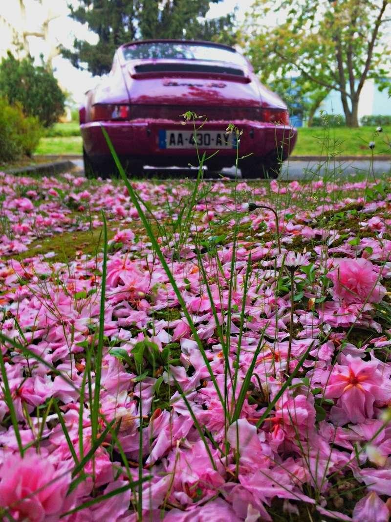 Une Belle photo de Porsche - Page 2 Img_6379