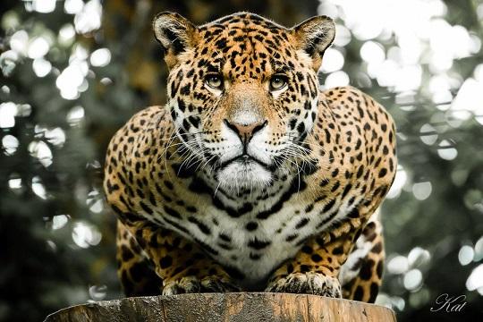 Rams @ Jaguars 1-scar10