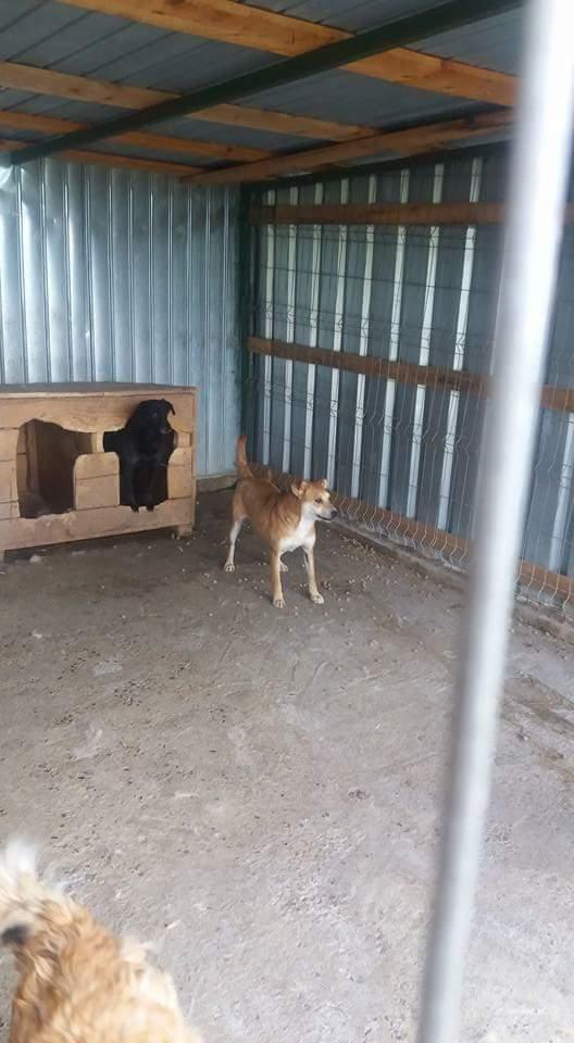 MAIKA - chienne croisée de taille moyenne, née 2015 - (Pascani) REMEMBER ME LAND Fb_img43