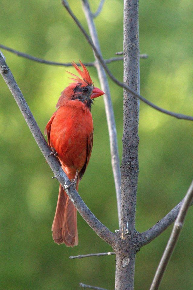 Ici ce n'est pas pour identifier un oiseau mais savoir s'il est malade ? Cardin10