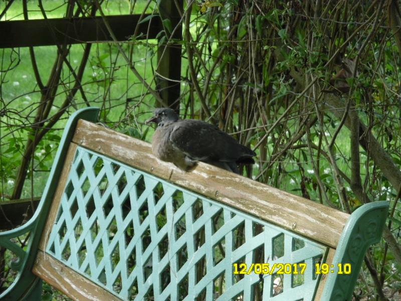 les visiteurs à plumes sauvages  2 - Page 11 Sam_1459