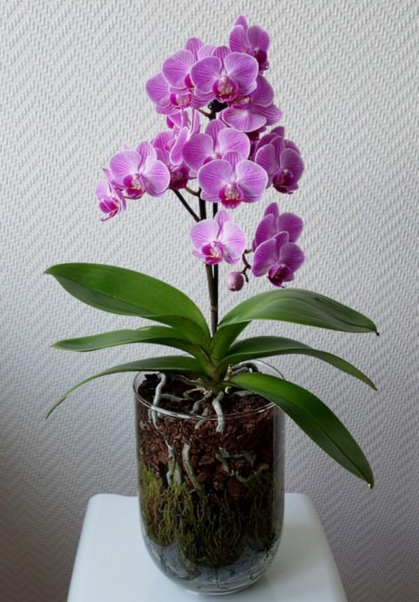 Orchideen in Glasvasen 6 (SGK) Phalae19