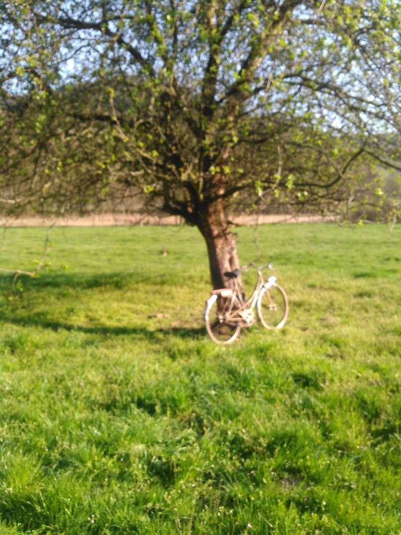 bicyclette motoconfort années 50/60 Kimg0057