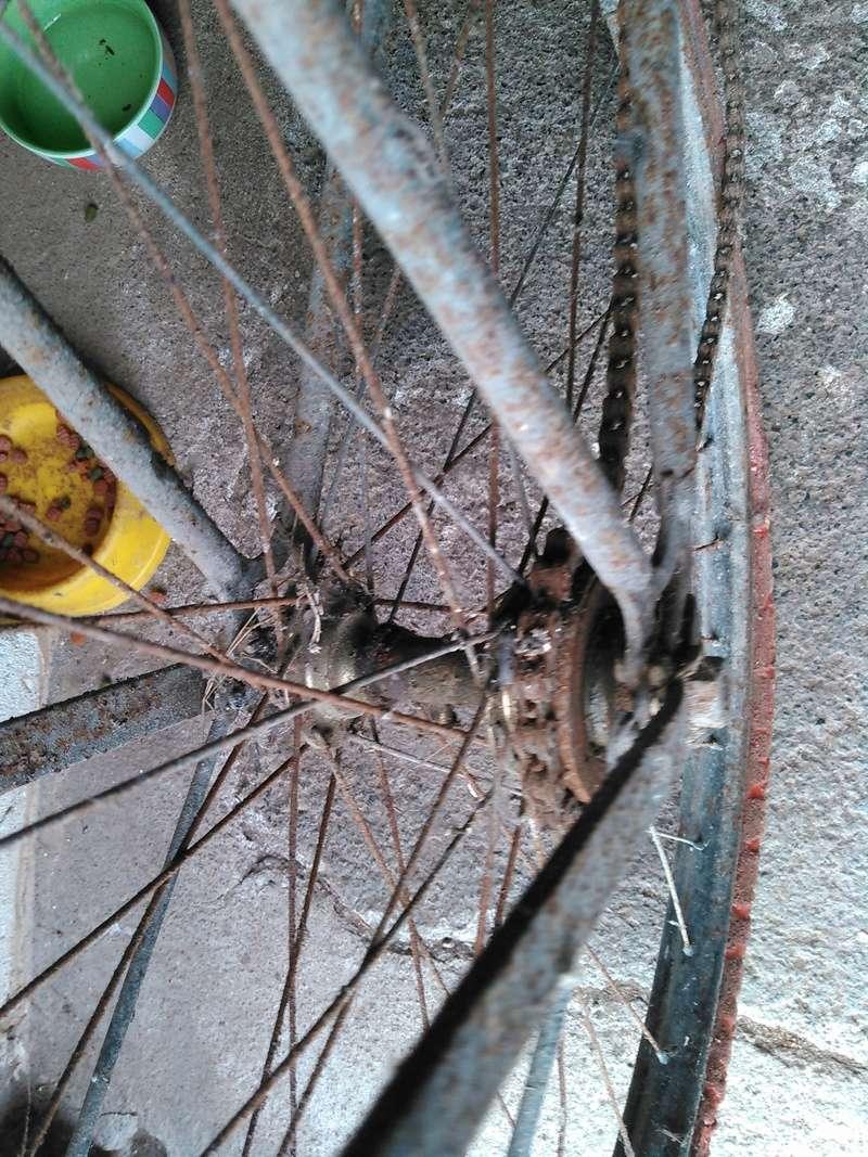 Vélo inconnu sorti de grange Kimg0173