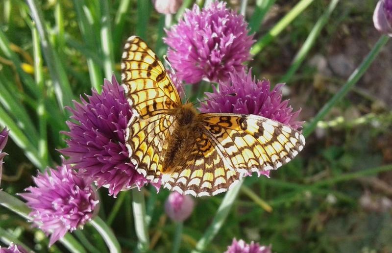 fil(et) à papillons - Page 11 Papill10