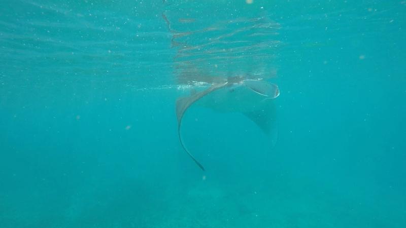 Mayotte  Img_2315