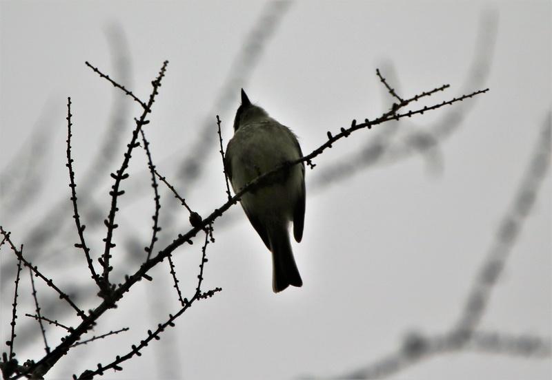 Oiseau mystère Img_3012