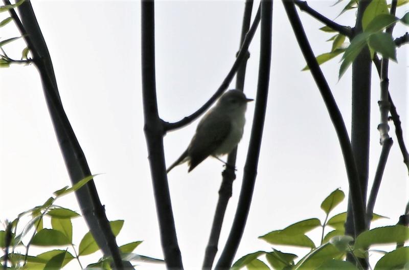 Oiseau mystère Img_3711