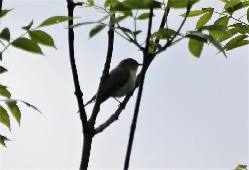 Oiseau mystère Img_3712