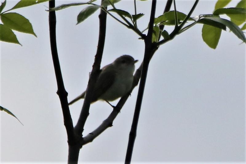 Oiseau mystère Img_3713
