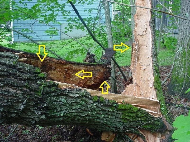 Storm damage Tronco10