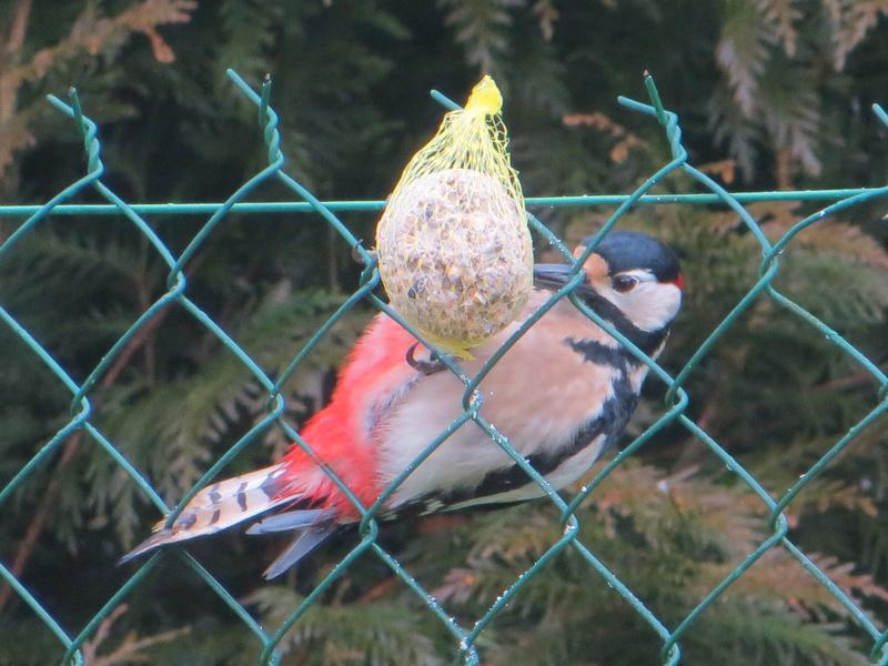 les oiseaux Img_1810