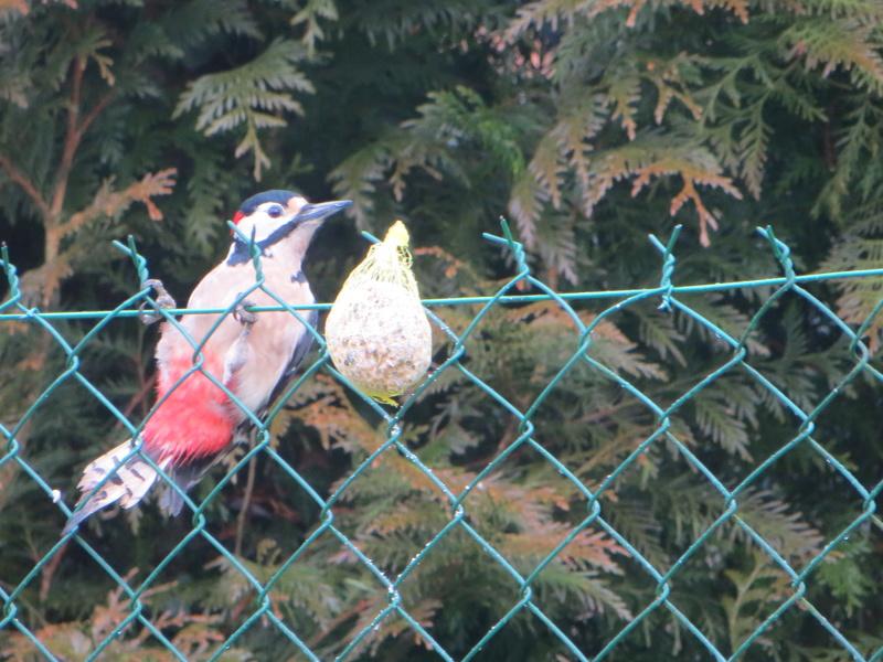 les oiseaux Img_1811