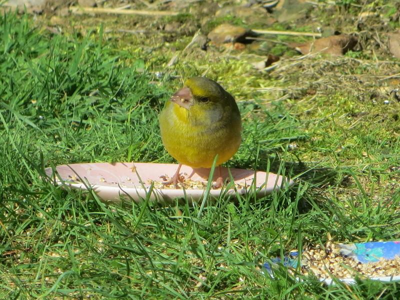 les oiseaux Img_1813