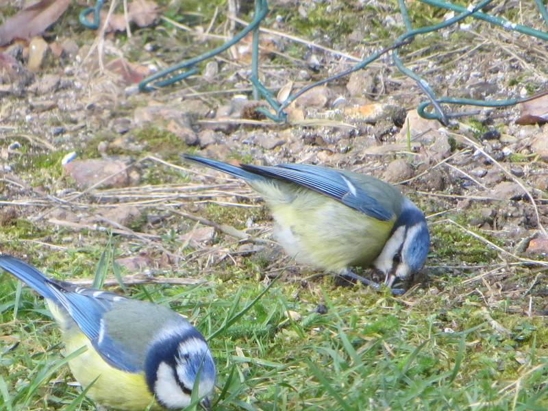 les oiseaux Img_1814