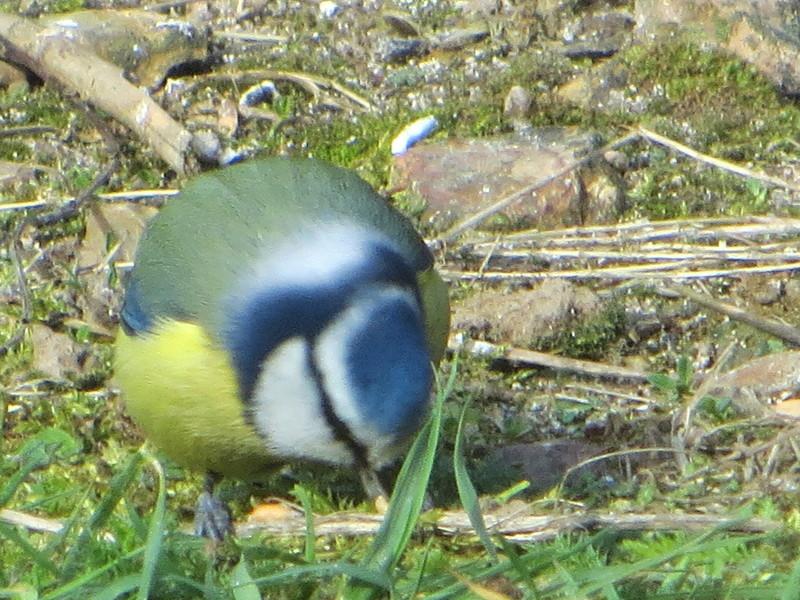les oiseaux Img_1815
