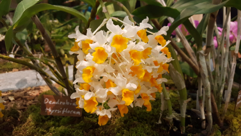 Ausstellung Faszination Orchideen in Winterthur  20170429