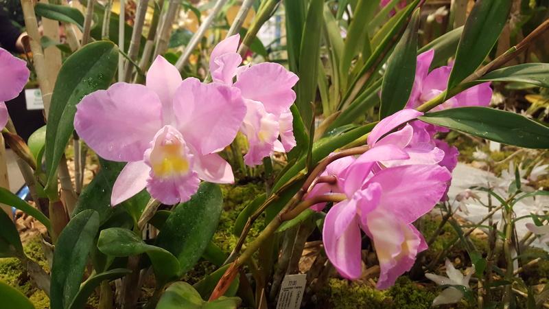 Ausstellung Faszination Orchideen in Winterthur  20170432