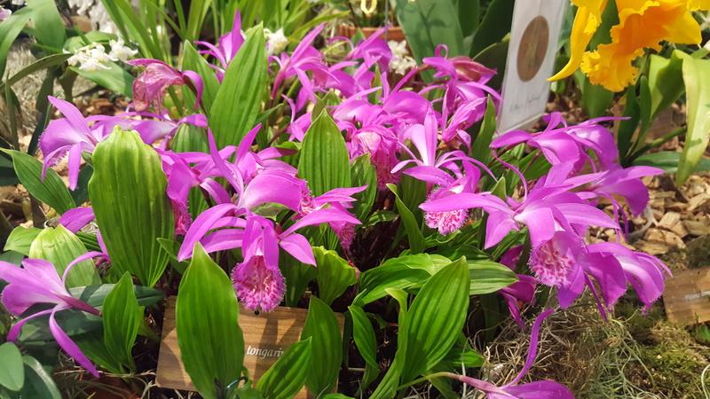 Ausstellung Faszination Orchideen in Winterthur  20170436