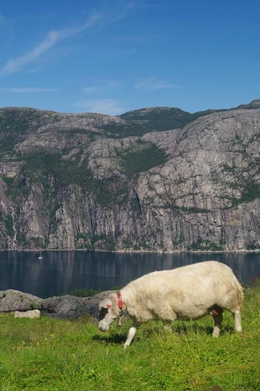 Norvège 2016 - retour en image sur notre première grande virée Imgp2414