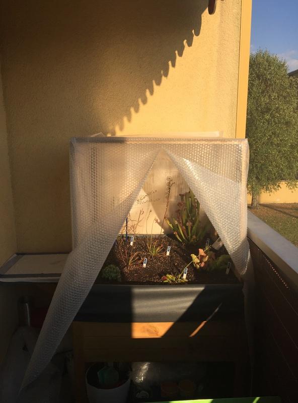 Ma tourbière de balcon. - Page 2 Img_1111