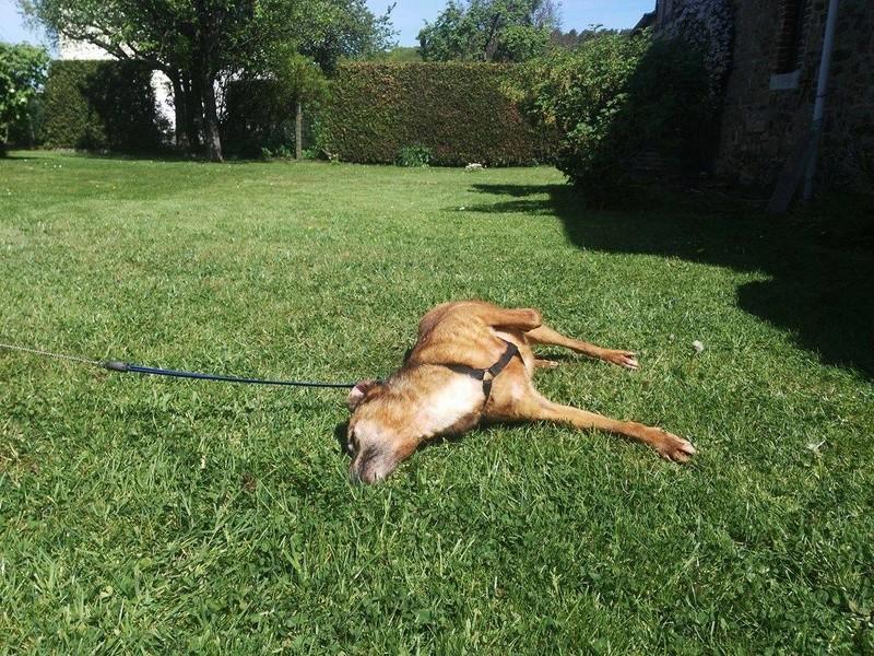 DIANA, F-X, née 2006, 14 kg (BELLA) - Prise en charge Asso ANIMALS RESCUE (BELGIQUE) - Page 3 18516410