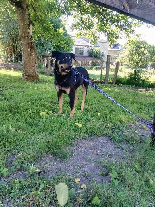 chien 39 - TAMS, M-X, taille moyenne, env. 23 kg, né 2012 (Fourrière BACKA) Pris en charge Animals Rescue - Page 5 Tamas10