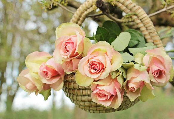 c`est la fête a petitgino Roses10
