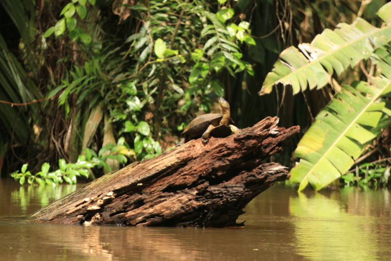 Nature au Costa Rica Img_6412