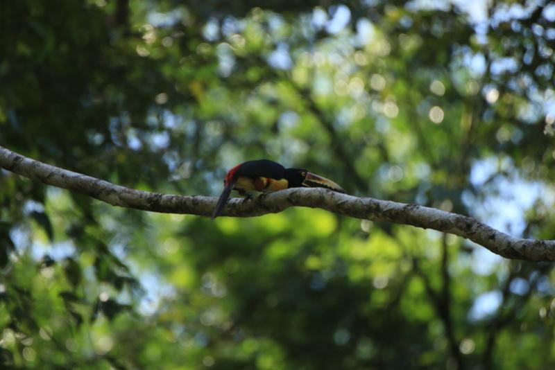 Nature au Costa Rica Img_6414