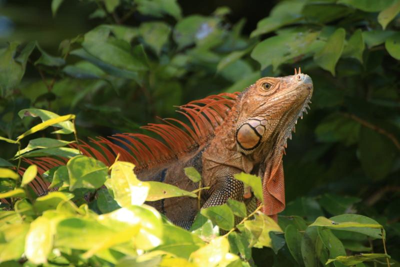 Nature au Costa Rica Img_6512
