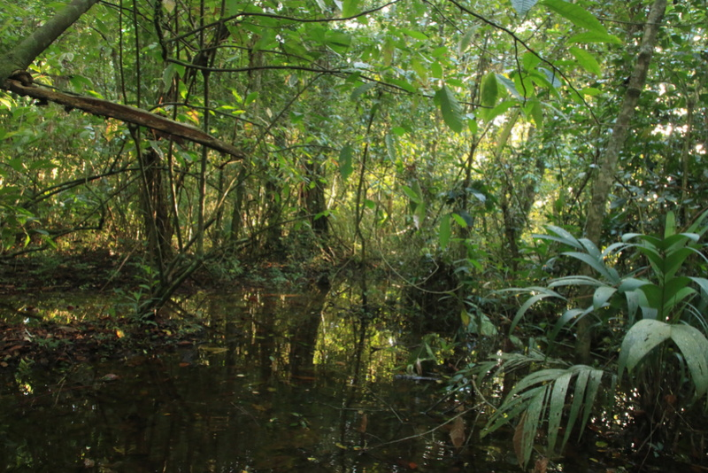 Nature au Costa Rica Img_6516